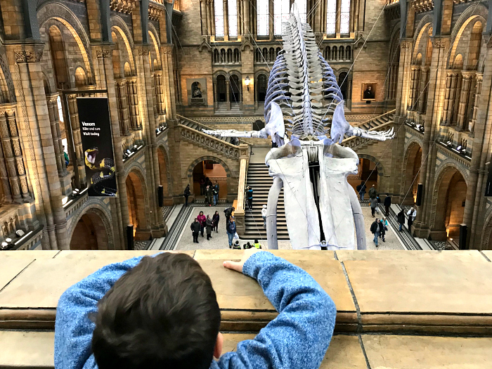 Otis at the Natural History Museum in London at HWM Blue Whale skeleton from above