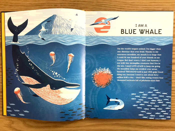 Blue Whale  Book of Bones at HWM