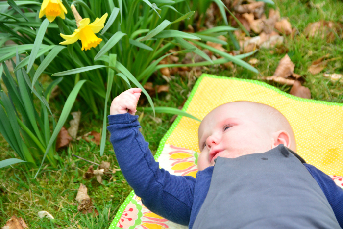 Otto reaching up to the daffodil at HWM