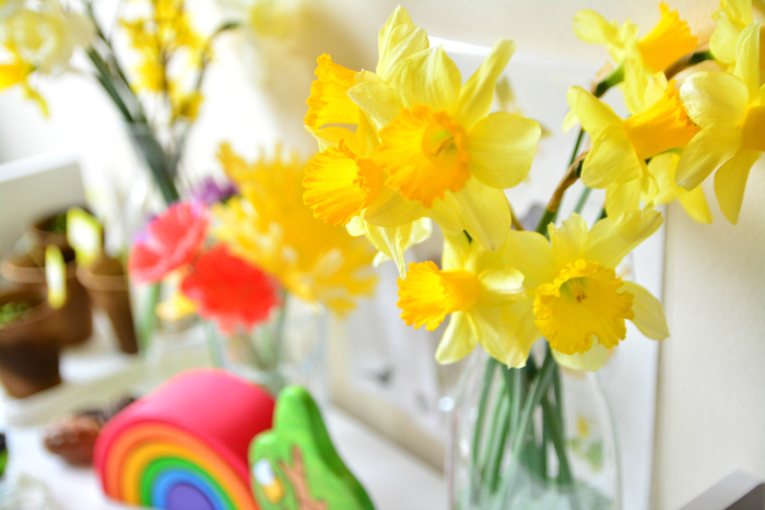 Spring daffodils at How we Montessori