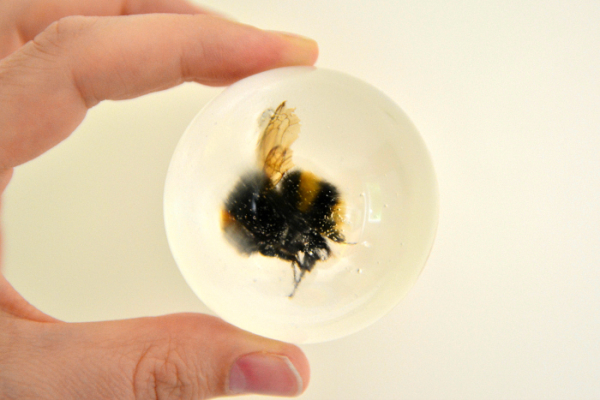 Two Ways To Preserve Insects Diy In Hand Sanitiser And Resin How We Montessori