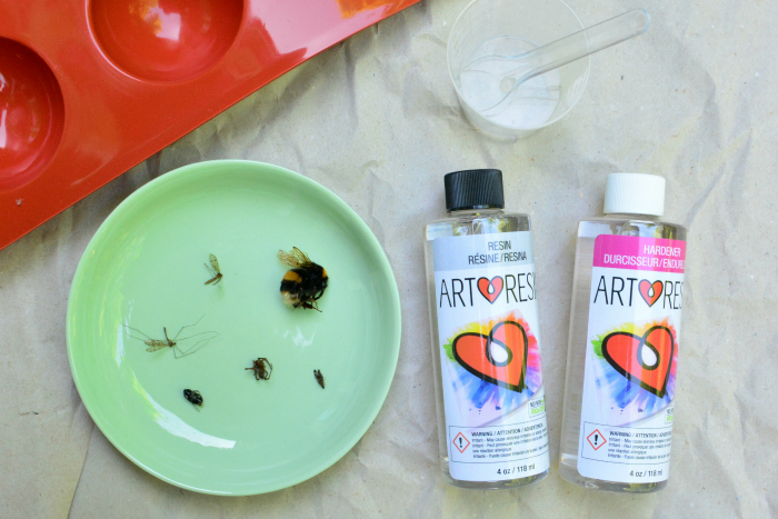 Preserving insects in resin at How we Montessori#1