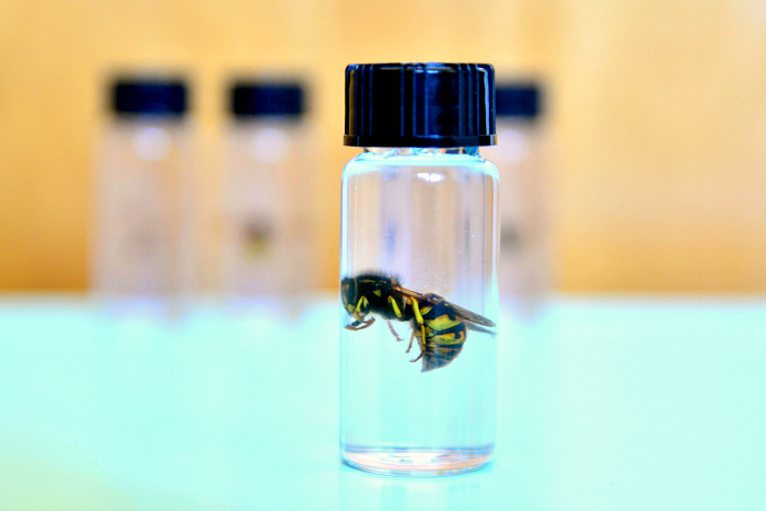 Preserved bee #2 at How we Montessori