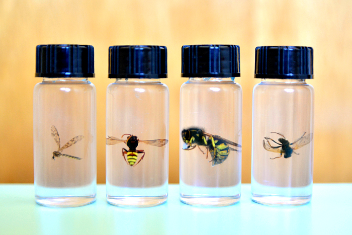 Preserved bee  insect collections at How we Montessori