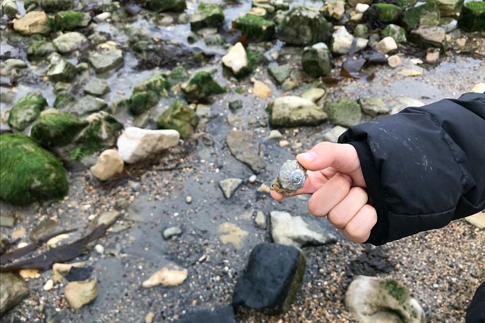 Otis' treasure at Lulworth Cove at How we Montessori