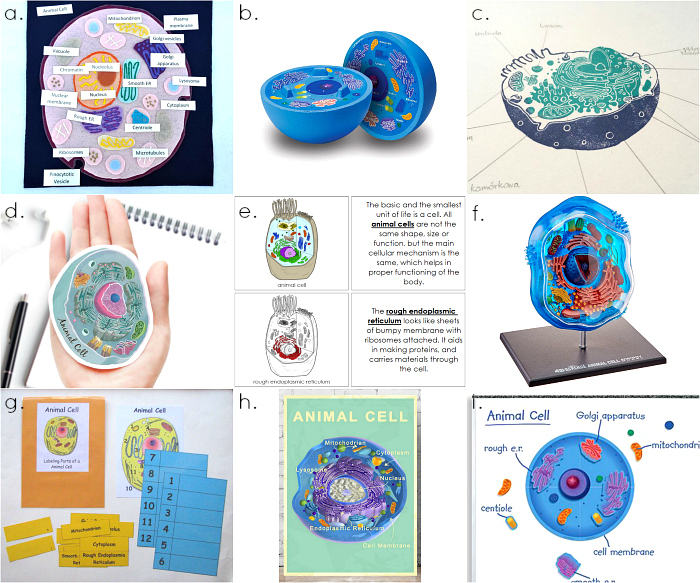 Animal Cells  Montessori tools