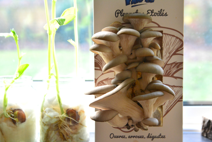 Growth in the Montessori home at How we Montessori  mushrooms and beans