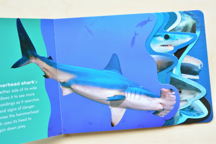 Sharks board book at How we Montessori  2019