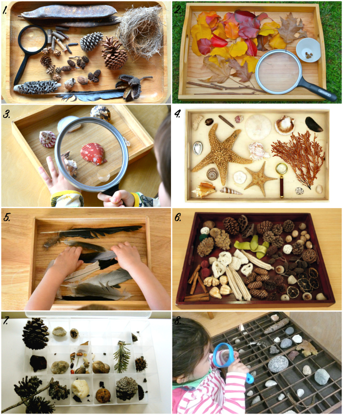 How To Montessori Toddler Nature Observation Tray How We Montessori