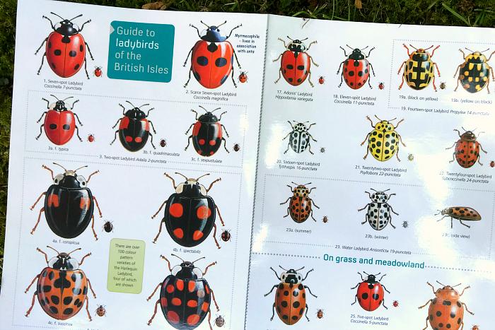How we Montessori Ladybug field guide