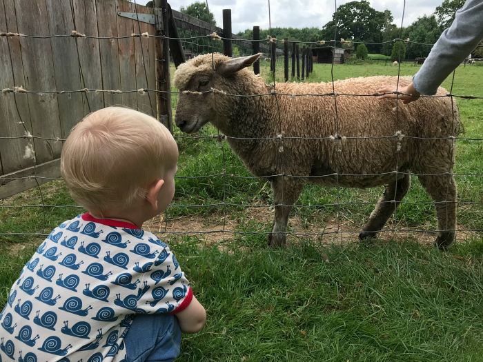 Otto with goat at children's farm at How we Montessori