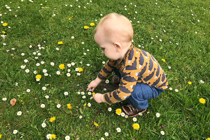 Otto picking flowers at How we Montessori 18 months  Montessori toddler 2019