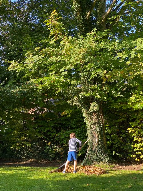 Otis raking autumn leaves practical life at how we montessori