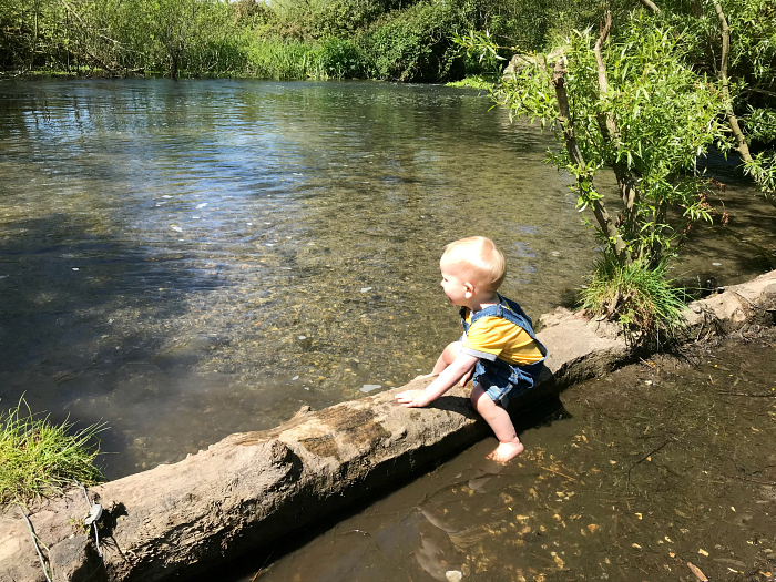 Otto 20 months  UK nature reserve May 2019