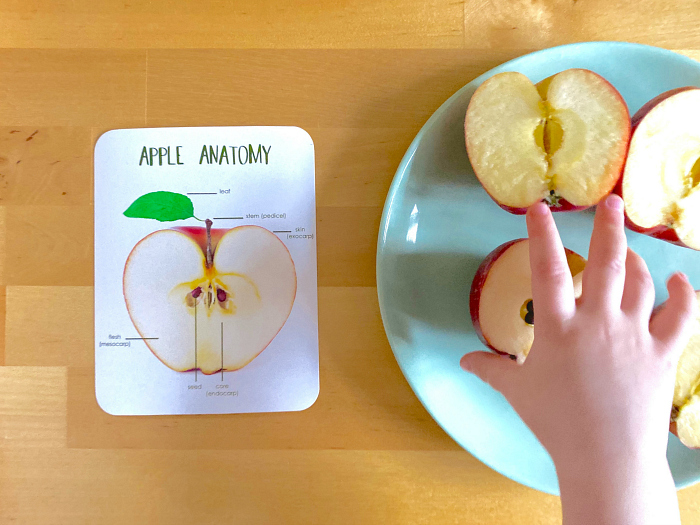 Anatomy of a Butterfly at How we Montessori