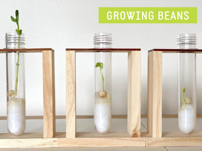 Watch Me Grow Kit How we Montessori growing beans