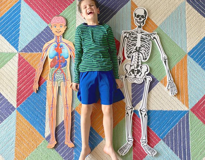 How we Montessori life sized anatomy puzzles