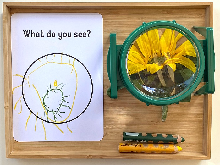 Magnifying work at How we Montessori