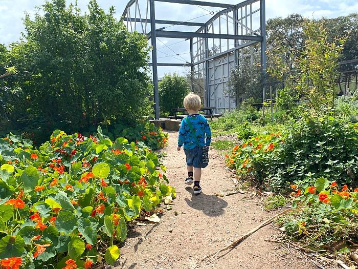 Nature walk at how we montessori otto three years