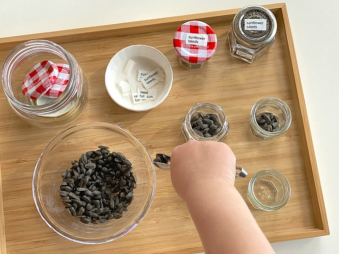 Packaging sunflower seeds at How we Montessori in jars