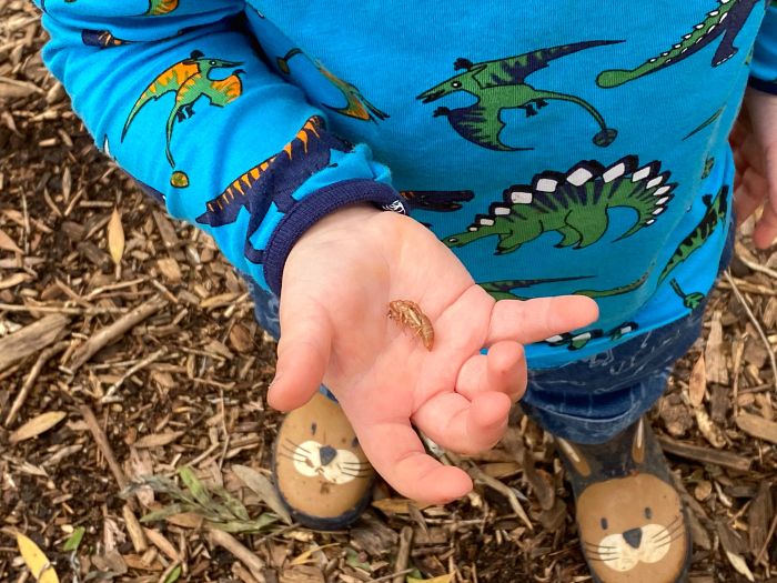 Otto cicada shell forest school find at How we Montessori