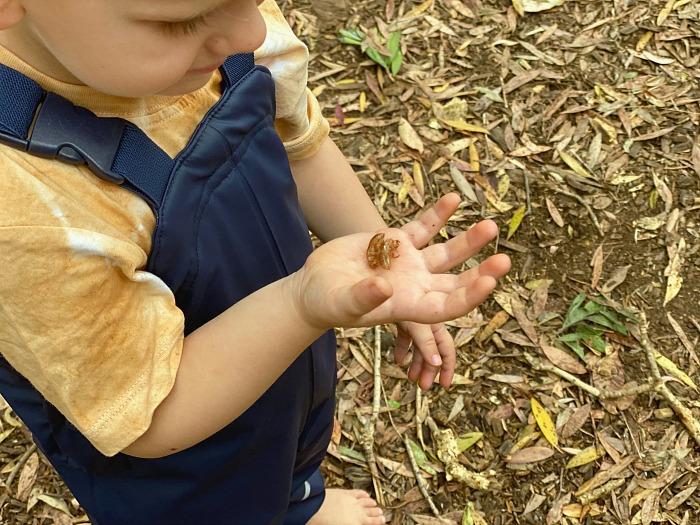 Cicada shells at How we Montessori