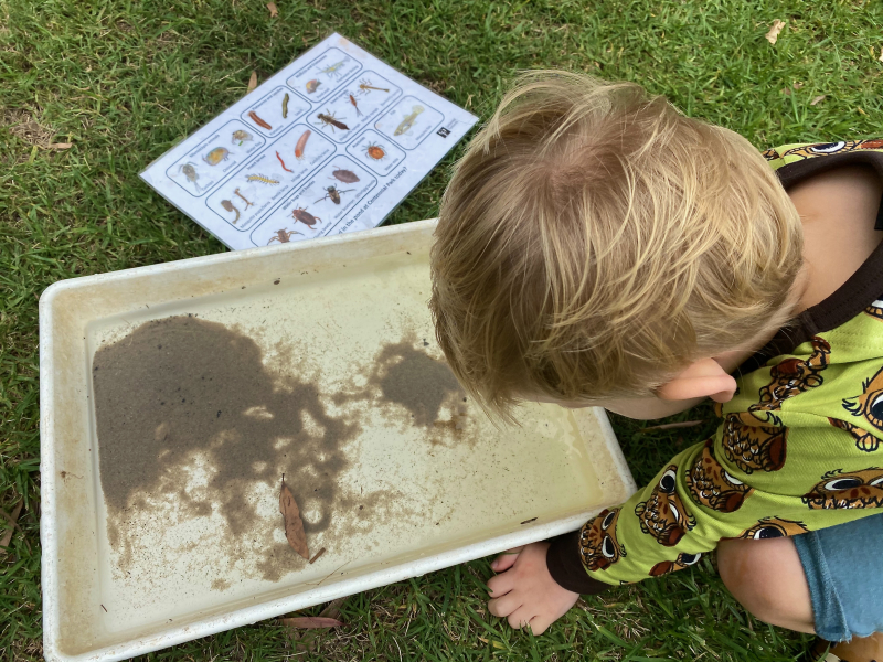 Net dipping at How we Montessori Sydney Otto three years old (1)