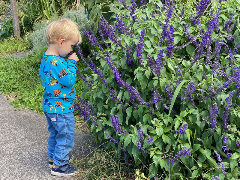 Nature walk How we Montessori permaculture garden
