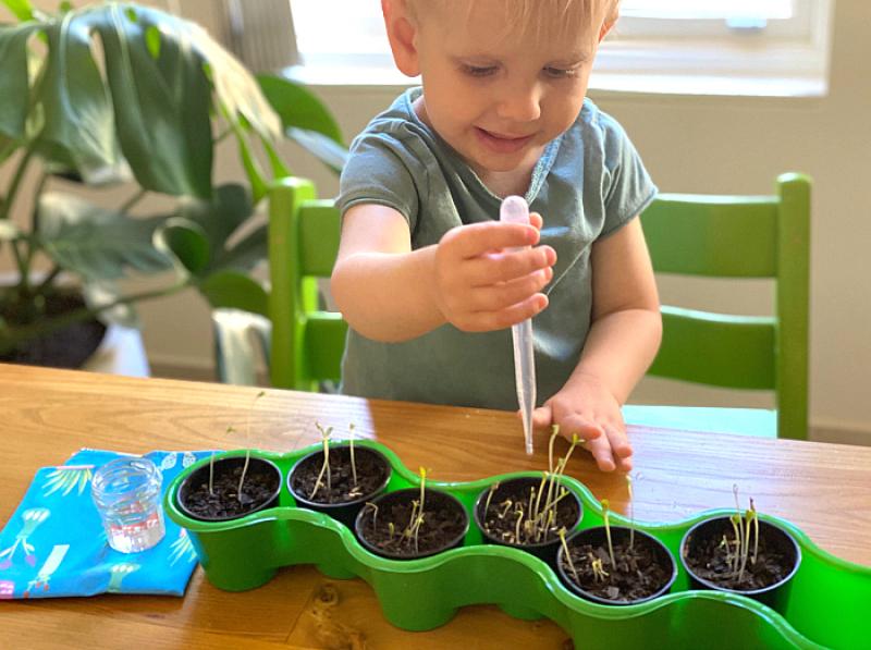 Otto watering seedlings