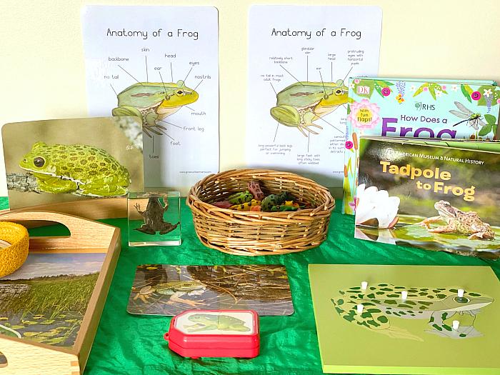 How we Montessori frog materials