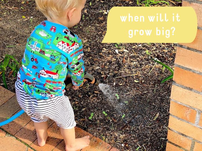 Sunflower seedlings at How we Montessori Otto 2 years toddler watering garden (2) (2)