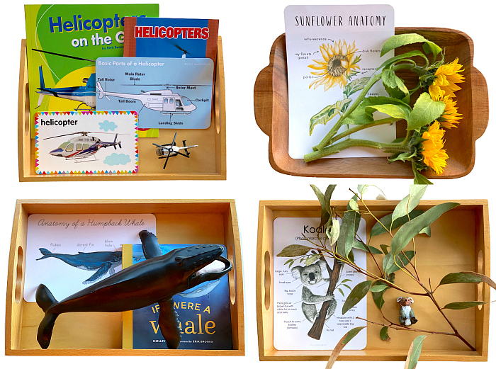 Anatomy Cards for Language Development at How we Montessori