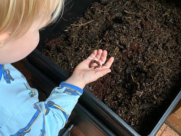 Vermiculture at How we Montessori