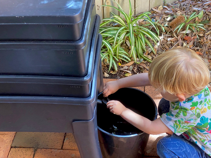 How we Montessori worm farm tea for garden Sydney