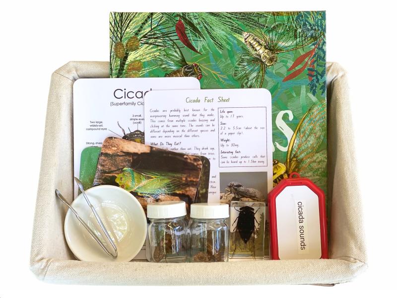 Cicada interest tray at How we Montessori Otto