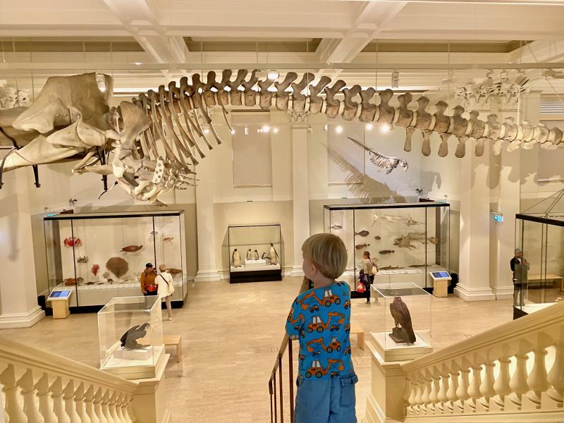Australian Museum Sydney 2021