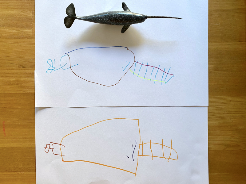 Drawing of a Narwal at three year old Otto at how we Montessori 45 months observational drawing