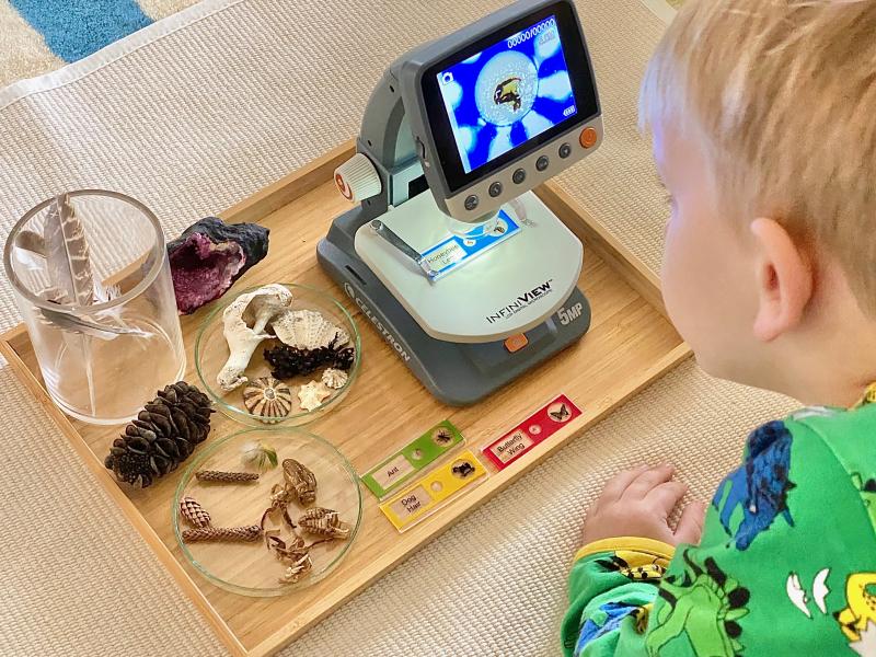 Digital microscope at How we Montessori honey bee leg at three years