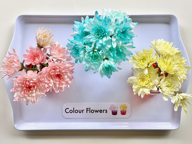 Food colouring flowers experiment at How we Montessori