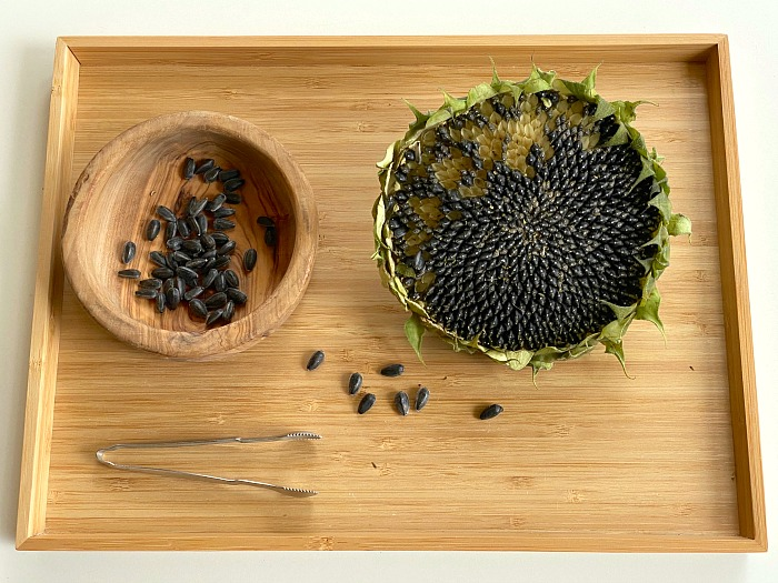 How we Montessori sunflower seed practical life tray