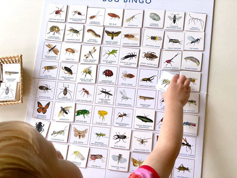 Bug Bingo at How we Montessori insect matching