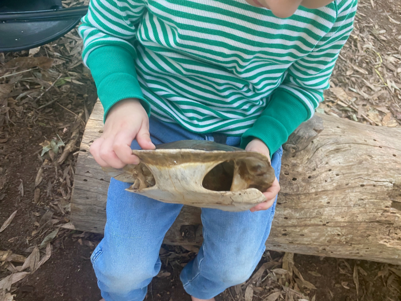 Exploring a real turtle shell at Forest School at How we Montessori