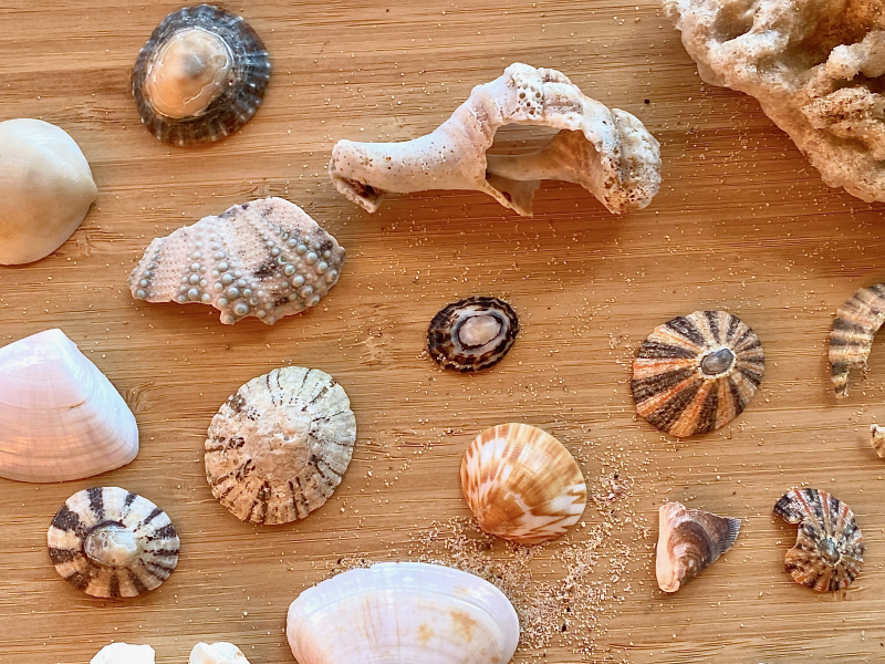 Seaside finds nature collection at How we Montessori