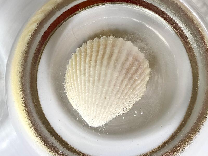 Seashell experiment at How we Montessori