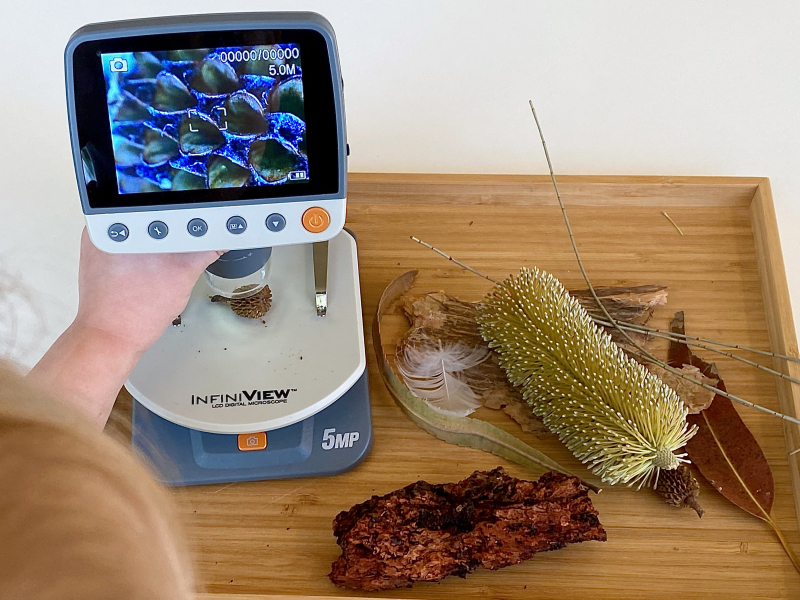 Seed pod under the microscope at How we Montessori