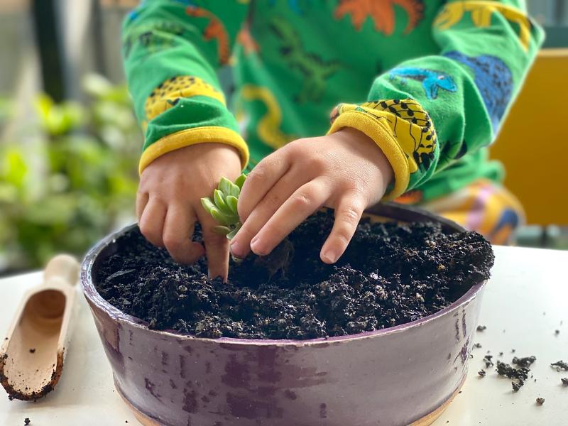 Planting succulent pot